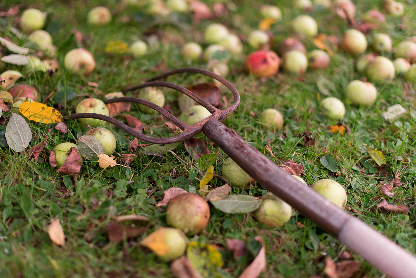 streuobstwiese-apple-picking-schloss-favorite-2